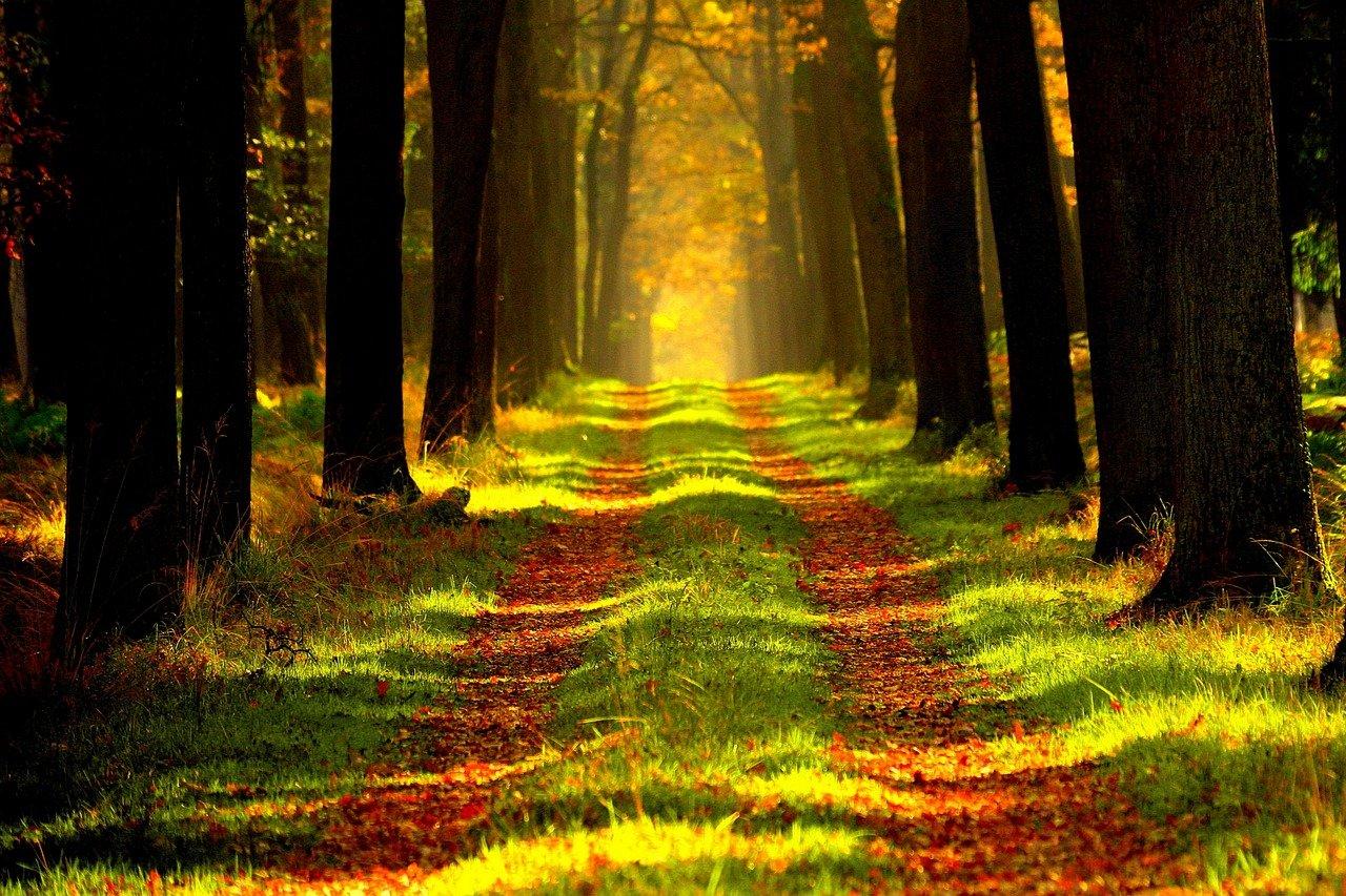 piesze-wedrowki-lesnymi-szlakami-czy-warto-img